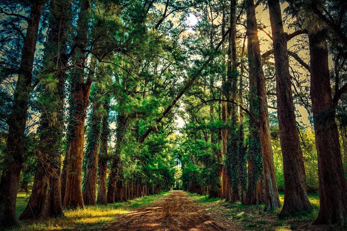 Como economizar tempo enquanto caminha